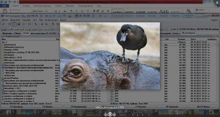 Просмотр изображения на сером прозрачном фоне в программе Picasa
